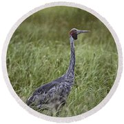 Brolga  Round Beach Towel