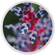 Bromeliad - Aechmia Dichlamydea - Guzmania Lingulata Round Beach Towel