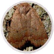 Bronze Moth Round Beach Towel
