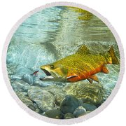 Brook Trout And Artificial Fly Round Beach Towel
