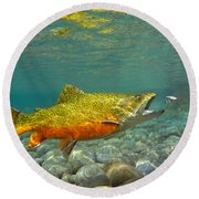 Brook Trout And Coachman Wet Fly Round Beach Towel