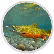 Brook Trout And Royal Coachman Round Beach Towel