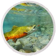 Brookie With Wet Fly Round Beach Towel