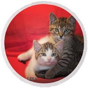 Brothers Kittens Round Beach Towel
