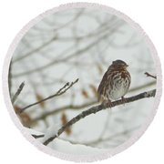 Brown And White Speckled Bird On Snowy Limb Round Beach Towel