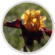Brown And Yellow Iris Round Beach Towel