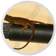Brown Anole On Pipe Round Beach Towel