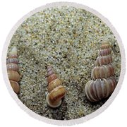 Brown-banded Wentletrap Round Beach Towel