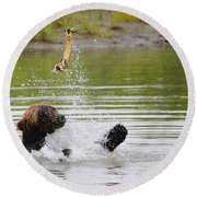 Brown Bear Playing With A Bone Round Beach Towel
