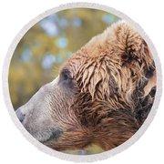 Brown Bear Portrait In Autumn Round Beach Towel