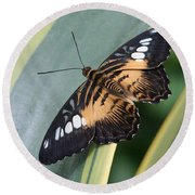 Brown Clipper Butterfly #4 Round Beach Towel