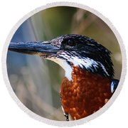 Brown Crested Kingfisher Round Beach Towel