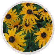 Brown Eyed Susans Round Beach Towel