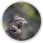 Brown Goshawk V2 Round Beach Towel