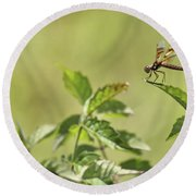 Brown Hawker Dragonfly Round Beach Towel