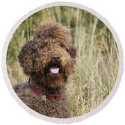 Brown Labradoodle In Field Round Beach Towel