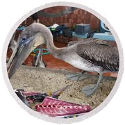 Brown Pelican At The Fish Market Round Beach Towel