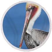 Brown Pelican Head Shot Round Beach Towel