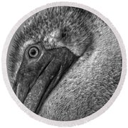 Brown Pelican In Black And White Round Beach Towel