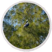 Brown Pelican In The Trees Round Beach Towel