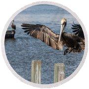 Brown Pelican Touchdown Round Beach Towel