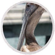 Brown Pelican Portrait Round Beach Towel