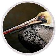 Brown Pelican Portrait Round Beach Towel