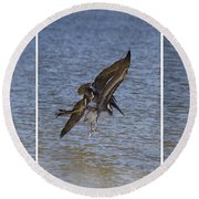 Brown Pelican - Triptych Round Beach Towel
