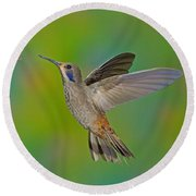 Brown Violet-ear Hummingbird Round Beach Towel