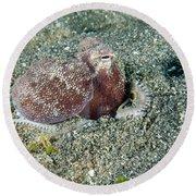 Brownstripe Octopus Burying Itself Round Beach Towel