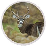 Buck Fever Round Beach Towel