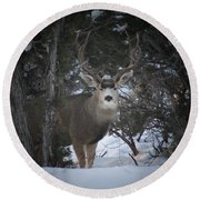 Buck I Round Beach Towel