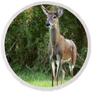 Buck In The Meadow Round Beach Towel
