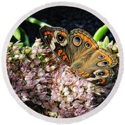 Buckeye Butterfly On Sedum Round Beach Towel