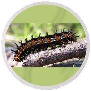 Buckeye Caterpillar 2 Round Beach Towel