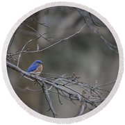 Budding Bluebird Round Beach Towel