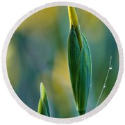 Budding Iris Round Beach Towel