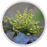 Budding Mahonia Round Beach Towel