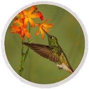 Buff-tailed Coronet Hummingbird No 1 Round Beach Towel