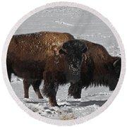 Buffalo In Snow Round Beach Towel