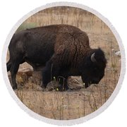 Buffalo Of Antelope Island Iv Round Beach Towel