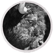 Buffalo Portrait Round Beach Towel