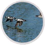 Bufflehead Duck Trio In Flight Round Beach Towel