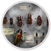 Bug Collector - The Insect Collection  Round Beach Towel by Mike Savad