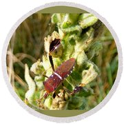 Bug On Stalk Of The Wooly Mullein Round Beach Towel