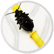 Bug On The Cob Round Beach Towel