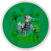 Bug On Wild Mint On Great Glacier Trail In Glacier National Park-british Columbia  Round Beach Towel