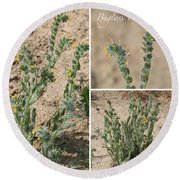 Bugloss Fiddleneck Collage Round Beach Towel