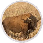 Bull Bison At The  Elk Ranch Grand Teton National Park Round Beach Towel