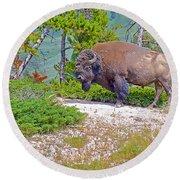 Bull Bison Near Mud Volcanoes In Yellowstone National Park-wyoming Round Beach Towel